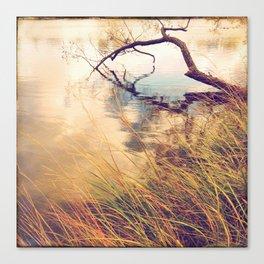 Autumn lake grasses Canvas Print