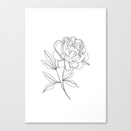 Botanical illustration line drawing - Peony Canvas Print