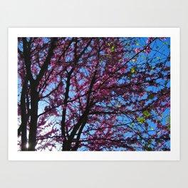 Blossom (1) Art Print