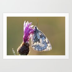 MARBLED WHITE BUTTERFLY ON KNAPWEED Art Print