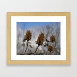 Winter Teasels Framed Art Print