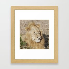 Friendly lion Framed Art Print