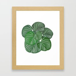 Calathea orbifolia Framed Art Print