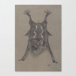 Sac Winged Bat Canvas Print