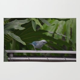 National Aviary - Pittsburgh - Blue Grey Tanager Rug