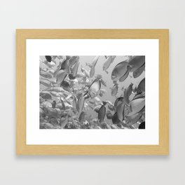 Come dive with me Framed Art Print