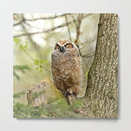 Sleeping in the Rain Metal Print