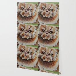 Cat, red hair, animal, persian Wallpaper