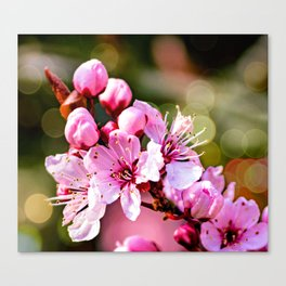 A sign of Spring. Canvas Print