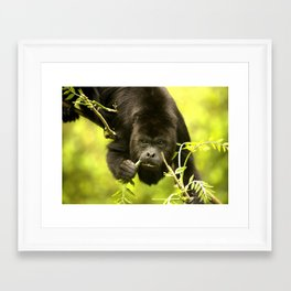 Howler monkey Framed Art Print