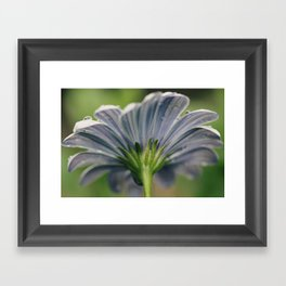 Behind the daisy Framed Art Print