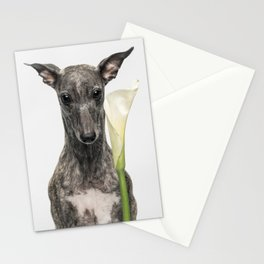 Flower Musa Stationery Cards