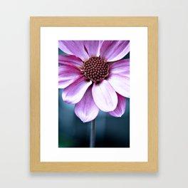 Dahlia sun Framed Art Print