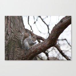Squirrel with peanut Canvas Print