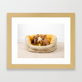 Two Small Dog Mixed Breed Puppies Framed Art Print