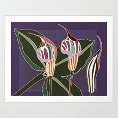Arum Lilies I. Art Print