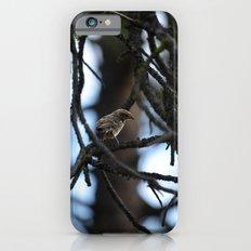 Sweet Sparrow Slim Case iPhone 6s