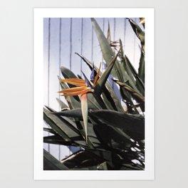 sun+flower Art Print