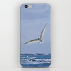 Terns diving into the sea iPhone & iPod Skin