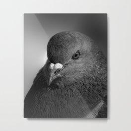 City Bird Pigeon BW Metal Print