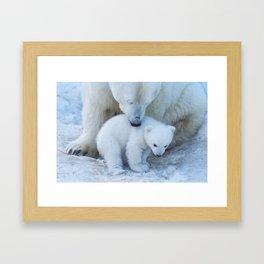 Polar Bear Mother and Cub portrait. Framed Art Print