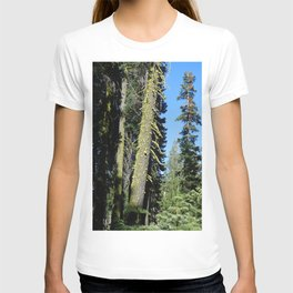 road trip, tree, leaning tree, moss T-shirt