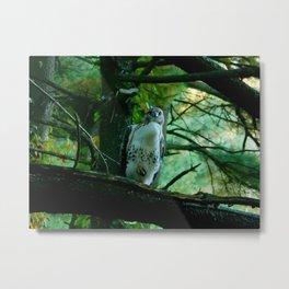 Posing Hawk Metal Print