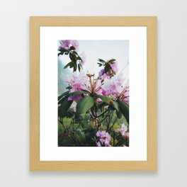 A new perspective.  Framed Art Print