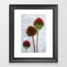 Stripped Echinacea Framed Art Print