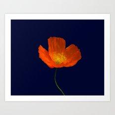 Sibirian poppy Art Print