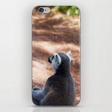 Lemur Catta III iPhone & iPod Skin