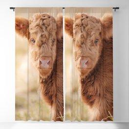 Baby Scottish Highland Cow Photo | Animal Photography | Fluffy Scottish Highland Calf Blackout Curtain