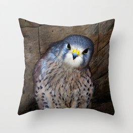 Falco tinnunculus or the common Kestrel Throw Pillow