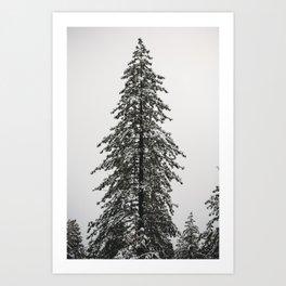 The Tallest Tree Art Print