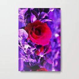 ice encased rose Metal Print