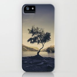 Tree at Llyn Padarn II iPhone Case