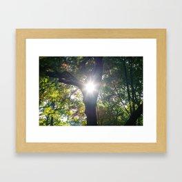 Sunlight in the park Framed Art Print