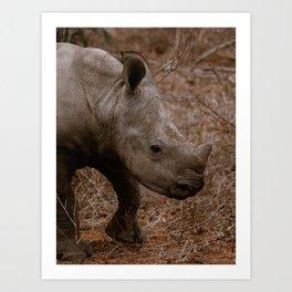 Baby Rhino Kruger Park | South-Africa Safari Photography | Rhinoceros | Animal Photography Art Print