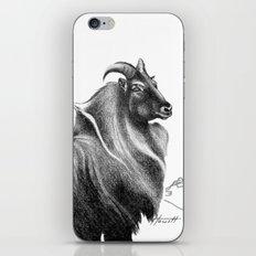Tahr / Thar iPhone & iPod Skin