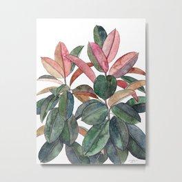 Rubber Plant Metal Print