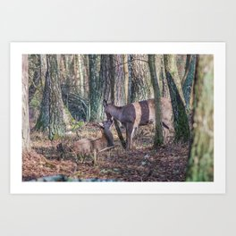 Doe and Fawn Art Print