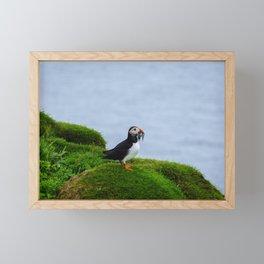 The Puffins of Mykines in the Faroe Islands VI Framed Mini Art Print