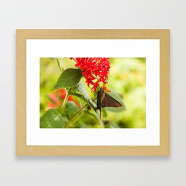 Blue Butterfly Photography Print Framed Art Print