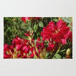 Scarlet Rhodies II Rug