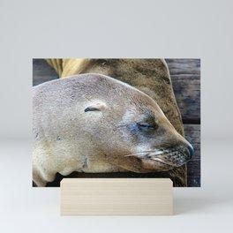 Californian Sea Lion, Monterey, California Mini Art Print