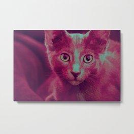 Pink Kitten Metal Print