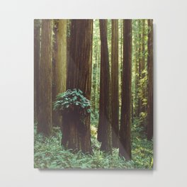 Fern Gully Metal Print