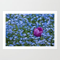 Pink Tulip in the blue Art Print