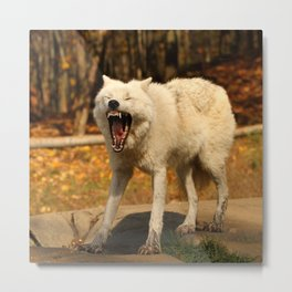I'll huff and I'll puff and I'll blow your house down Metal Print