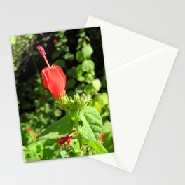 Arboretum Flower- Color Stationery Cards
